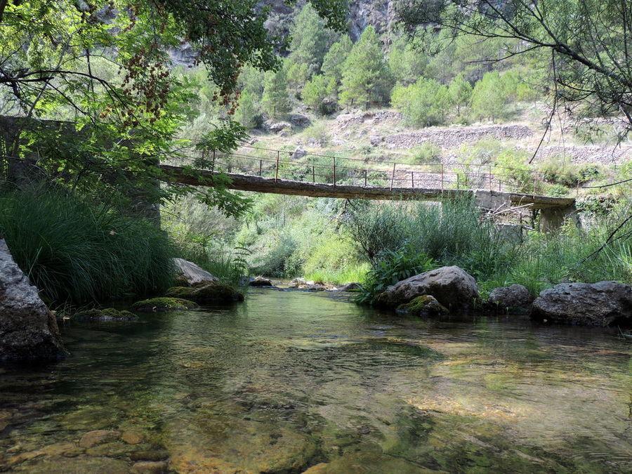 Puente en Castelvispal